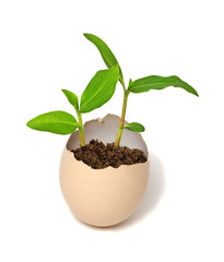 Plant hatching from an egg