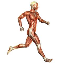laufender Muskel Mann