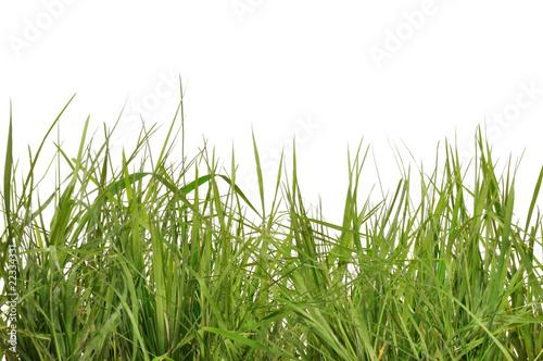 Herbes sauvages sur fond blanc photo libre de droits sur - Cuisiner les herbes sauvages ...