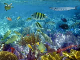Fotobehang Koraalriffen caribbean reef tropical fishes underwater