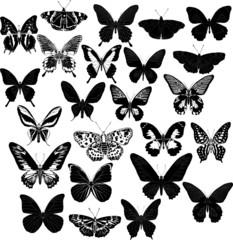 twenty four black butterflies