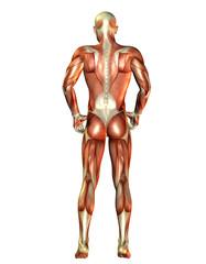 Wall Mural - Rückenansicht Mann Muskeln