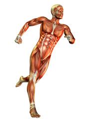männlicher Muskelaufbau Laufstudie