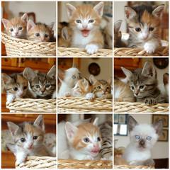 mosaico gattini nel cesto con griglia