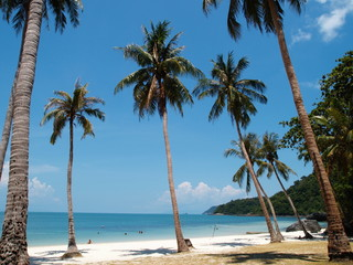Coconut Palm Trees on A Beach