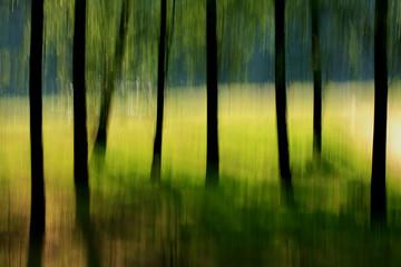 alberi 89
