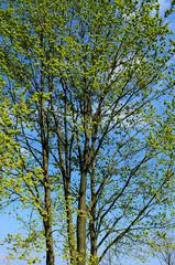alberi 361