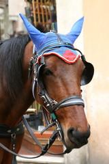 horse in a cap