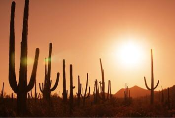 Poster de jardin Parc Naturel Cactus