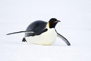 Door stickers Antarctic Emperor penguin (Aptenodytes forsteri)