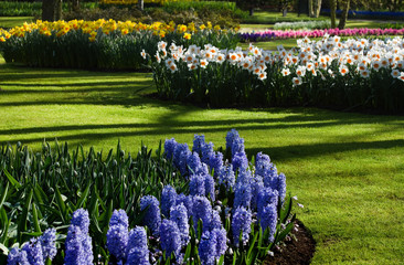 Spring garden with hyacinths and daffodils