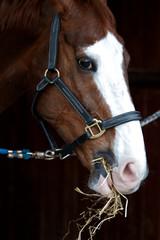 cavallo 8