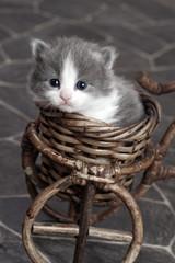 Kitten in Little Basket