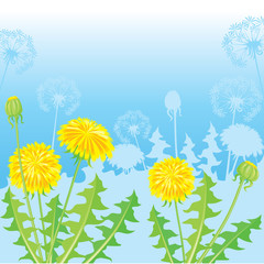 Summer Postcard from dandelions