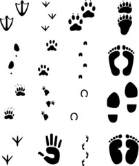 animal and human footprints set