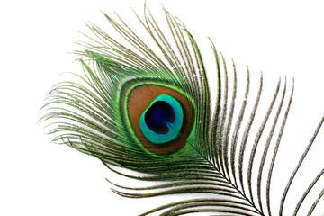 Stores à enrouleur Paon plume de paon