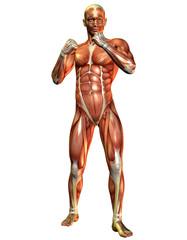 Wall Mural - Muskelaufbau Mann in stehender Pose