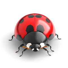 ladybird isolated on white background