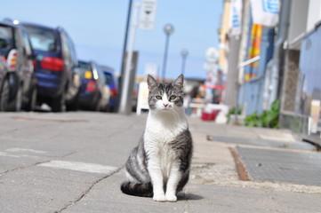 Straßenkatze