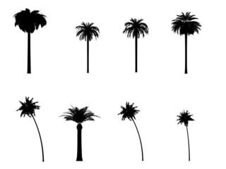 tree palm silhouette outline