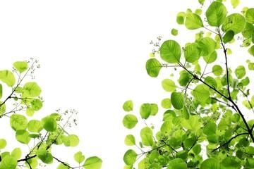 Fresh green leaves over white