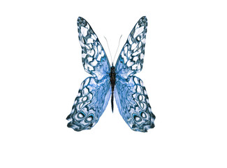 Bright Blue Monarch Butterfly isolated on white background