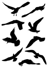 Silhouettes of seagulls