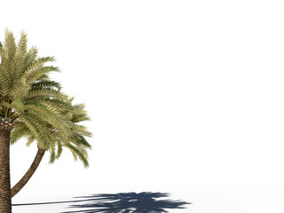 tree palm 3d cg