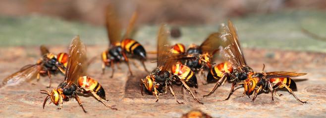 wasp bee macro