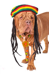 Rastafarian Dog