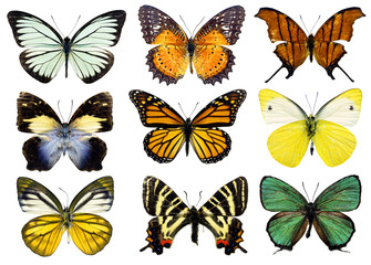 Some various butterflies isolated on white
