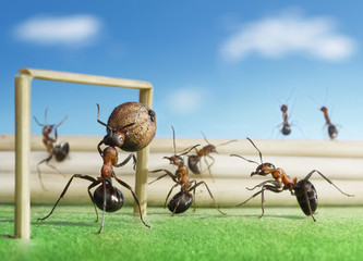 micro football, ants play soccer with pepper seed