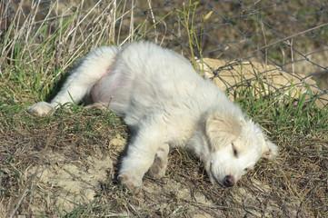 Puppy Is Sleeping