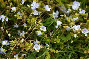 Fotoväggar - Blumen
