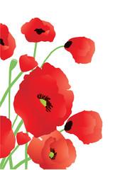 Vector illustration of beautiful poppies