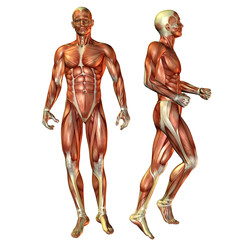 Muskelaufbau Mann in stehender Pose