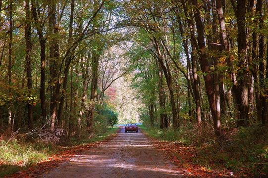 Woodland Autumn Path