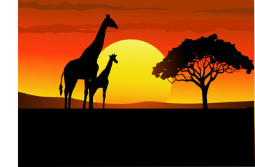Sunset wildlife Africa