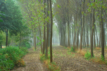 alberi 797