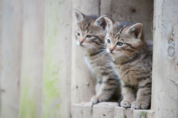cute wildcat babies