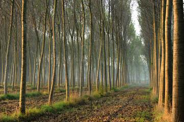 alberi 814