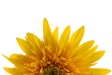 Sunflower detail isolated on white