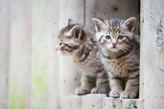 cute wildcat babies