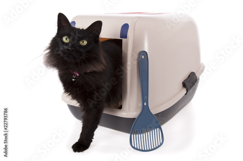 train cat to use litter box