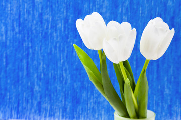 Three white tulips on a blue background