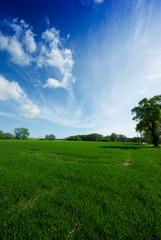 Wiese, Baum und blauer Himmel 2