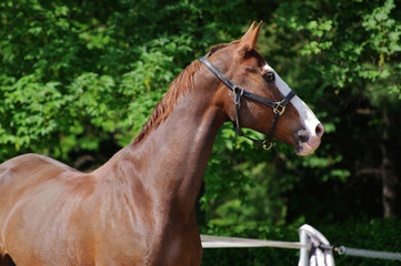 Cavallo al paddock 19