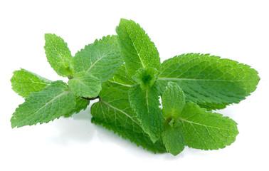 Fragrant leaflets, green mint.