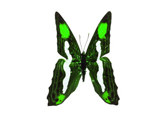 Green And Black Color Monarch Butterfly