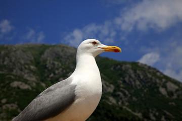 The big seagull on seacoast